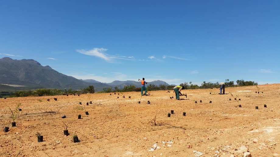 Planting in the Olifants River Valley, Citrusdal